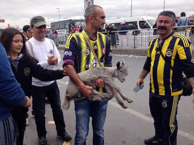 Bakırköy'de Kalabalığın Arasına Karışan Keçi Yavrusu İlgi Odağı Oldu