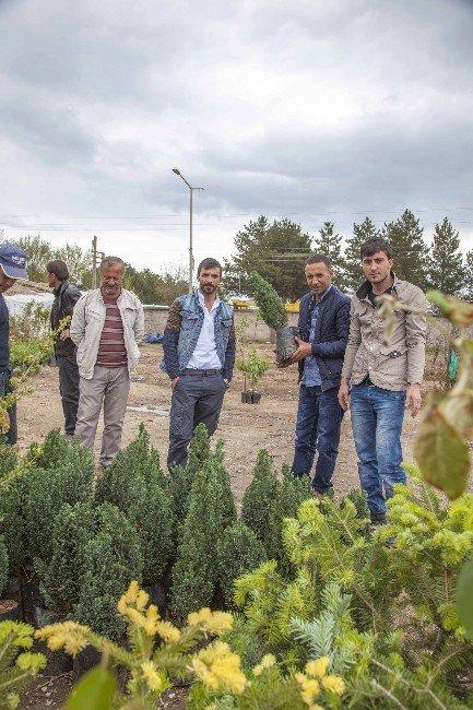 Ahlat'ta Fidan Satışı