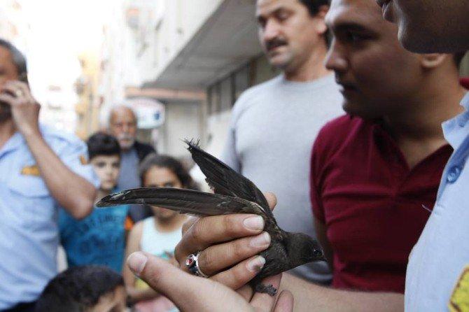Balkonda Asılı Kalan Ebabil Kuşunu İtfaiye Ekipleri Kurtardı