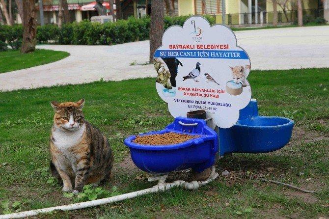 Sokak Hayvanlarına Gönüllü Koruyucular