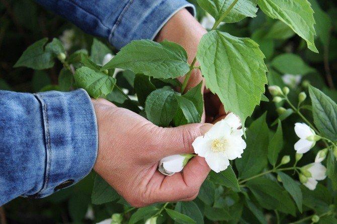 Kadın Çiftçiler Parfümeri Sektörüne El Attı