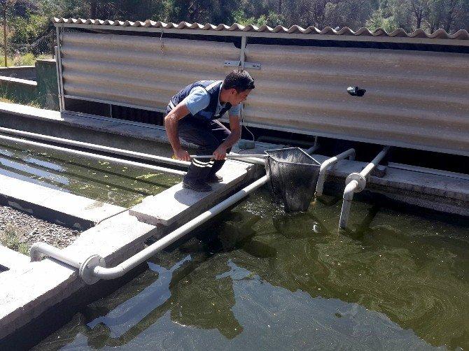 Büyükşehir Haşereyle Biyolojik Mücadele Başlattı