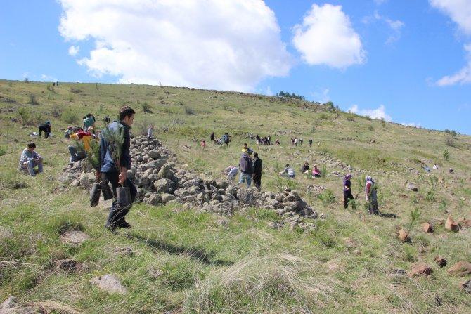 Köy özlemi çeken vatandaşlar, 2 bin 900 ağaç dikti