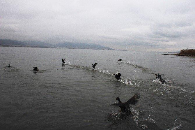 Katrana bulanan deniz kuşları doğaya salındı