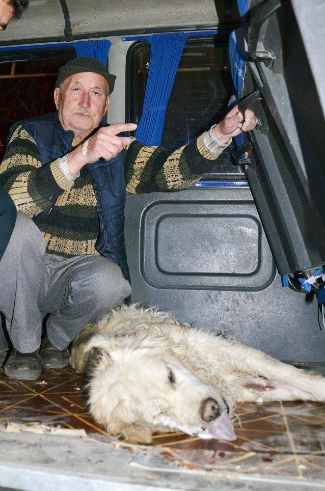 Milas'ta 15 hayvan telef edildi