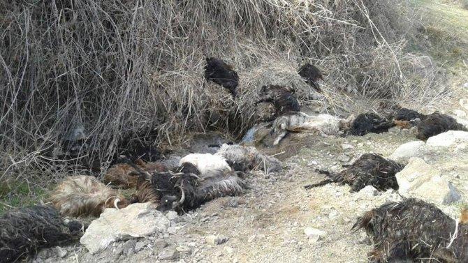 Kayalıklardan atlayan 35 keçi telef oldu