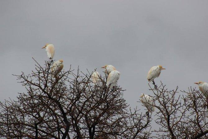 Göçmen kuşlar Hakkari üzerinde güneye göç etti