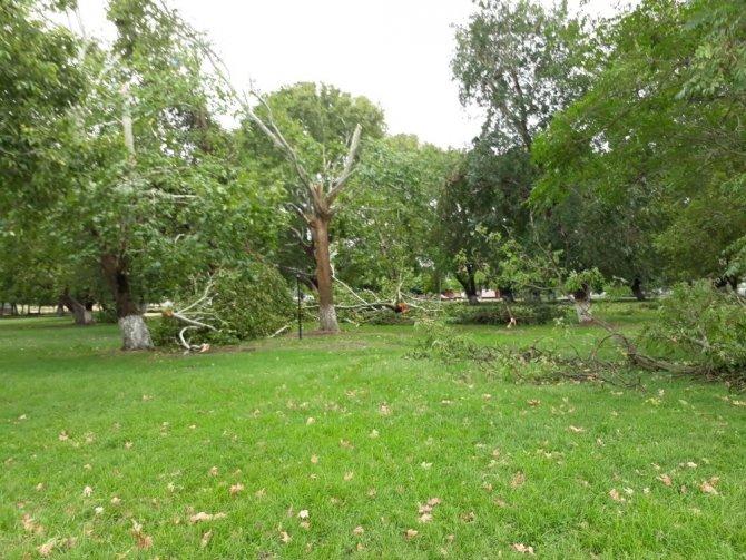 Yağmurla gelen hortum ağaçları kökünden söktü