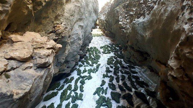 Diyarbakır'da zehir tacirlerine darbe