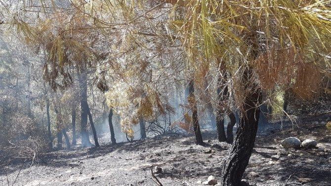 Manavgat'taki yangın kısa sürede kontrol altına alındı