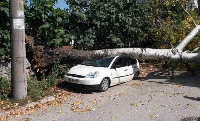 Ağaç otomobilin üzerine devrildi