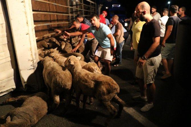Hayvan yüklü kamyonda can pazarı yaşandı