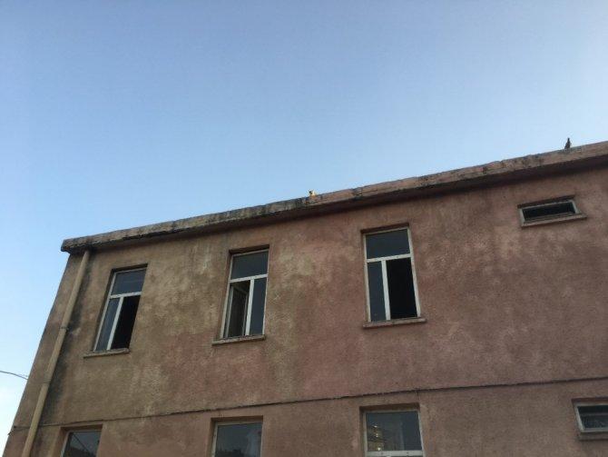 Kuşları avlamak için çatıya çıkan kedi mahsur kaldı