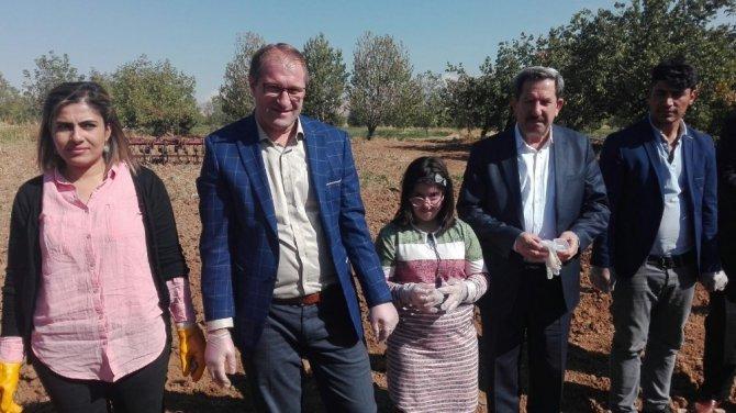 Kovancılar'da ters lale soğanı ekildi