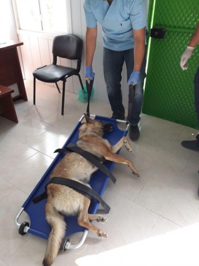 Ereğli'de sokak hayvanları kısırlaştırılıyor
