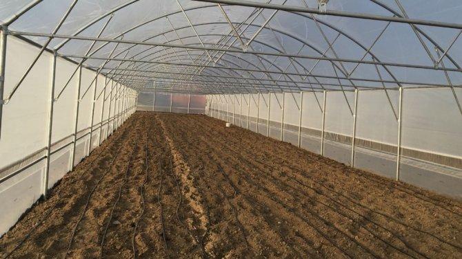 Manisalı çiftçiler desteklerle kurdukları serada üretim yapıyor