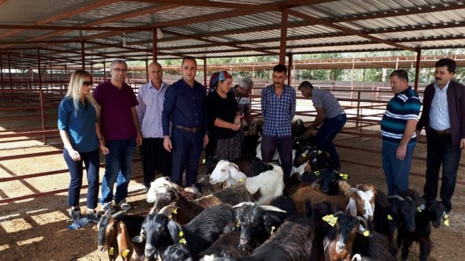 Genç çiftçilere 74 küçükbaş hayvan dağıtıldı