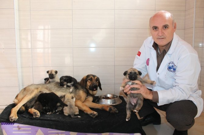 Köylü ağlayarak yardım istedi, 21 yavru köpek kurtarıldı
