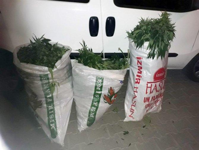 Uyuşturucu tacirleri FETÖ firarisinin arazisine kenevir ekmiş