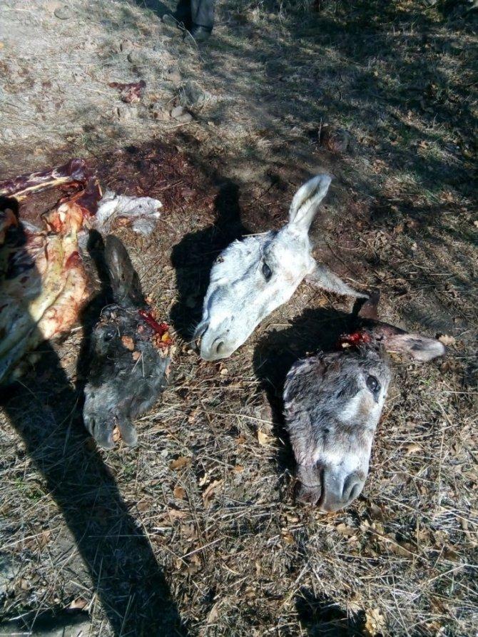 Eşekleri kesip, kemik ve başlarını bırakıp kaçtılar