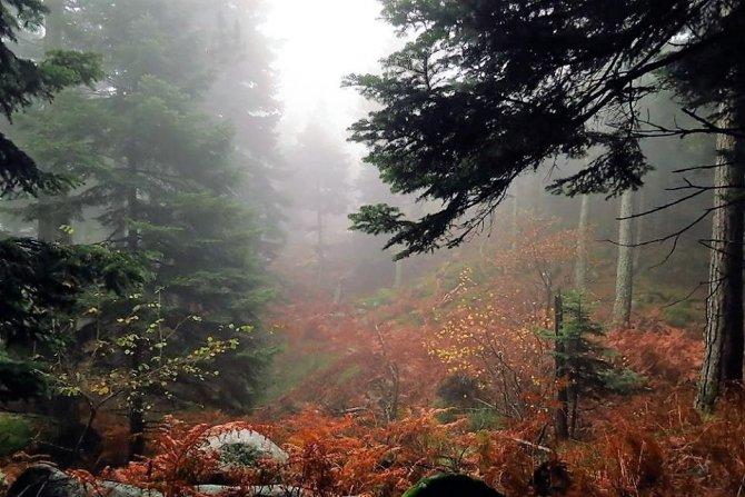 Kazdağları'nın sisli güzellikleri adeta büyülüyor