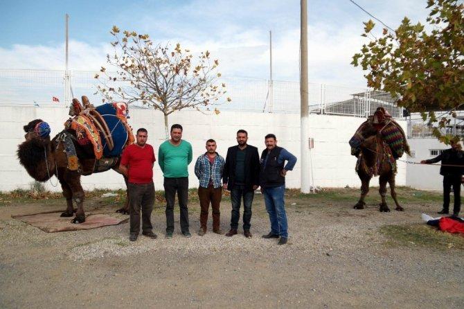 Edremit'te 50 deve törenle havut giydi
