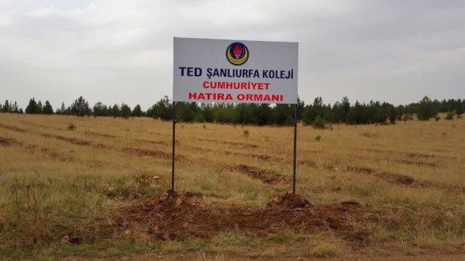TED'li öğrencilerin diktiği fidanlar 'Cumhuriyet Ormanı' olacak