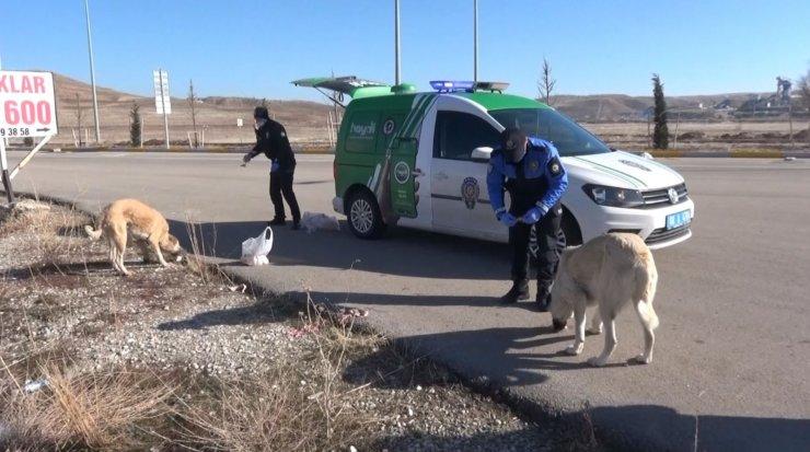 Aksaray'da hayvan koruma polisleri sokak hayvanlarının tüm ihtiyaçları karşılıyor