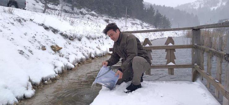 Bolu'da göllere 620 bin alabalık yavrusu bırakıldı