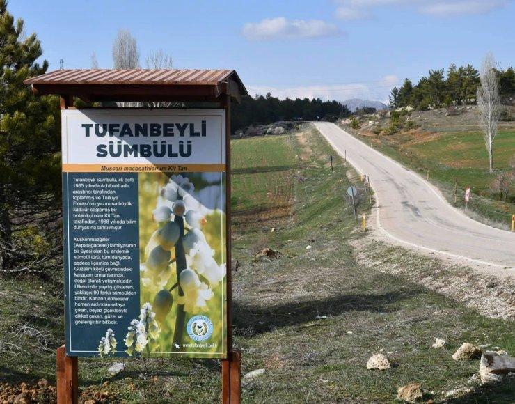 Tufanbeyli'nin sembolü olan sümbül için ilçede tanıtım billboardları yapıldı