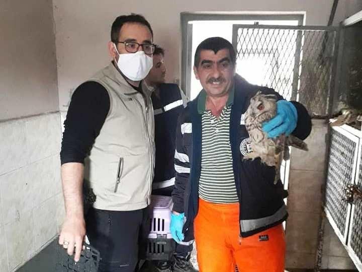 Kütahya'da yaralı baykuş tedavi altına alındı