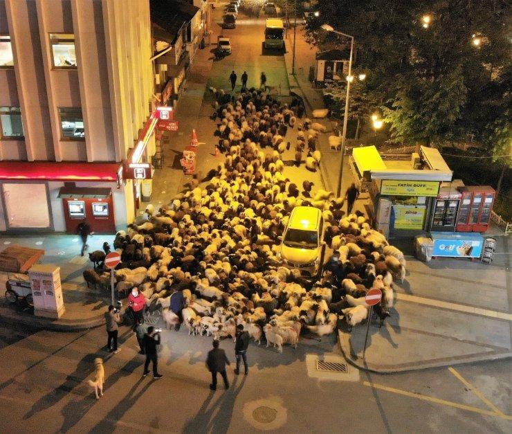 Yüzlerce koyun şehir merkezinden geçti