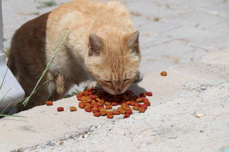 Bozova'da sokak hayvanları unutulmadı