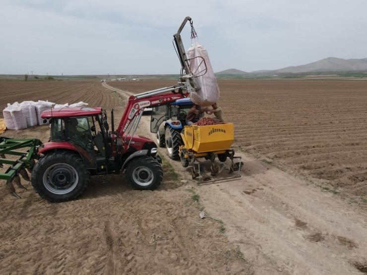 Tomarza'da patates ekimi başladı