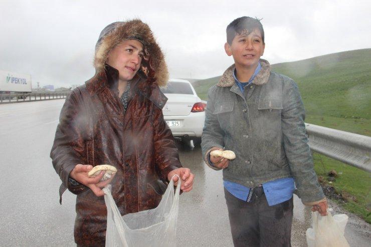 Otoyolda mantar satan çocukların yağmur altında ekmek parası mücadelesi
