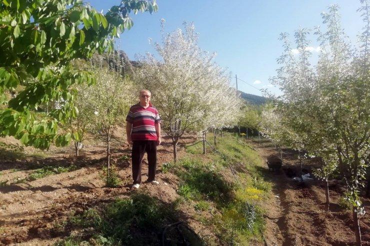 Gümüşhane'de vişne üreticileri sezondan ümitli