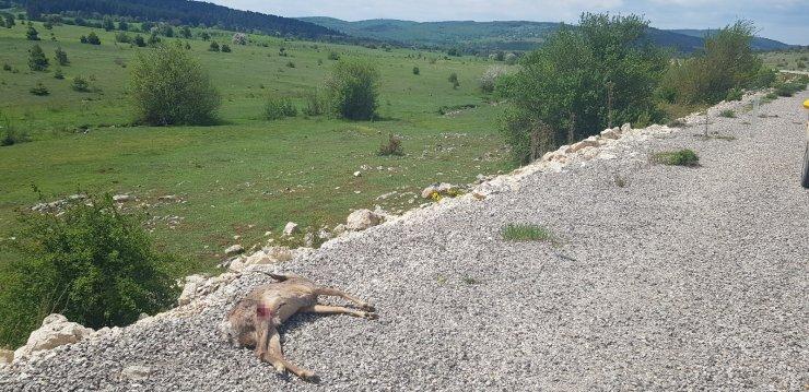 Karabük'te aracın çarptığı karaca telef oldu