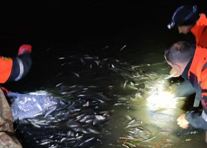 Van Gölü'nde 15 ton inci kefali kurtarıldı