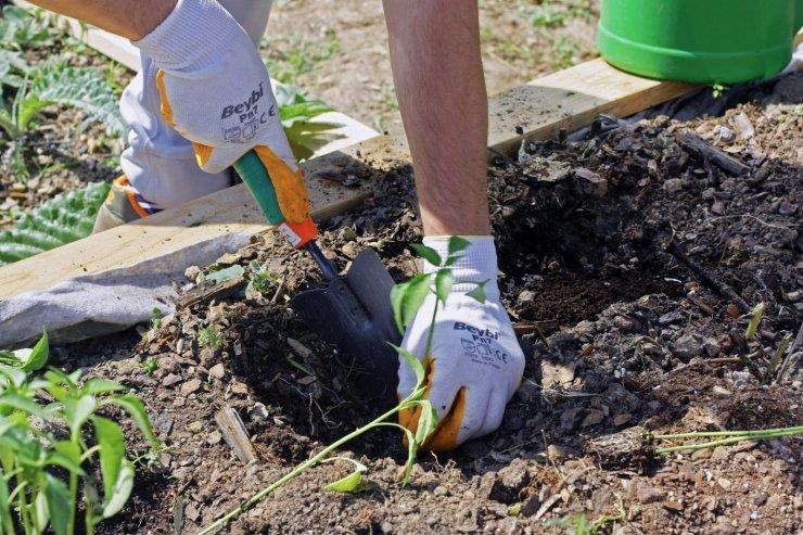 Geleceğin şefleri, Dünya Çevre Günü'nde 'Terasta Tarım' alanında fidelerini ekti