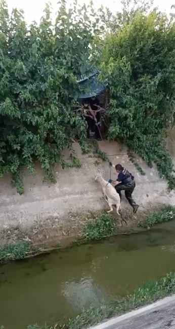 Kanala düşen koyunu itfaiye kurtardı