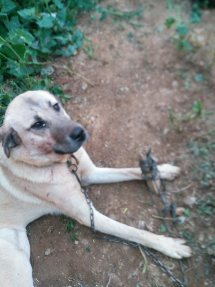 Isparta'da köpeğe tuğla ile saldırdılar