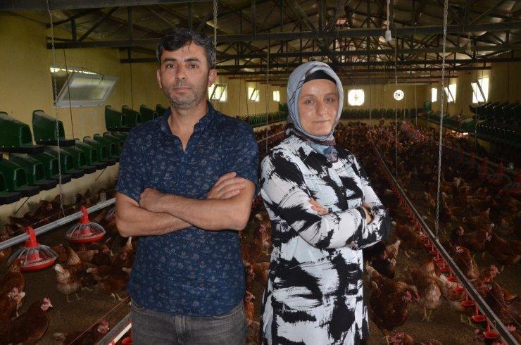 Organik yumurta üretimi yapan karı-koca, ihracata başladı
