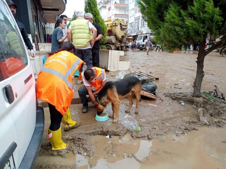 Altınordu Belediyesi, selden etkilenen Artvin'de sokak hayvanlarını unutmadı