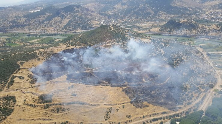 İzmir'de makilik ve zeytinlik alanda çıkan yangın kontrol altında