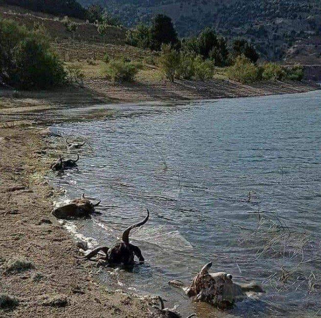 Kurban kellelerinin baraja atılması tepkilere neden oldu