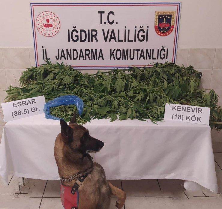 Iğdır'da uyuşturucu tacirlerine ve kaçakçılara geçit yok