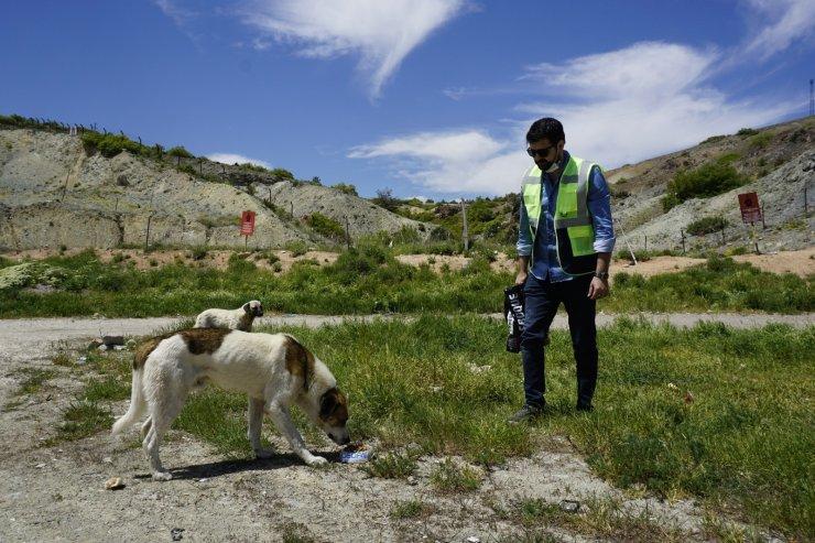 OEDAŞ tatil döneminde de sokak hayvanlarını yalnız bırakmadı