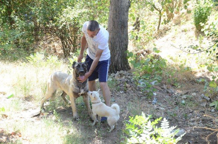 Duyarlı vatandaş sayesinde sokak köpeği ölmekten kurtuldu