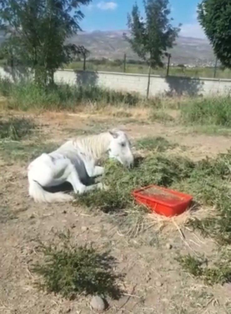 Bitkin halde bulunan at tedavi altına alındı