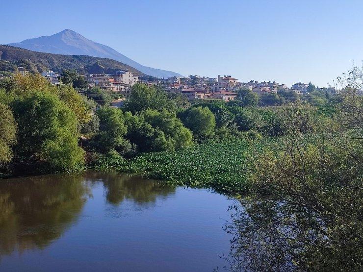 Hatay'da su sümbülleri Asi nehrinde ilginç görüntüler oluşturdu